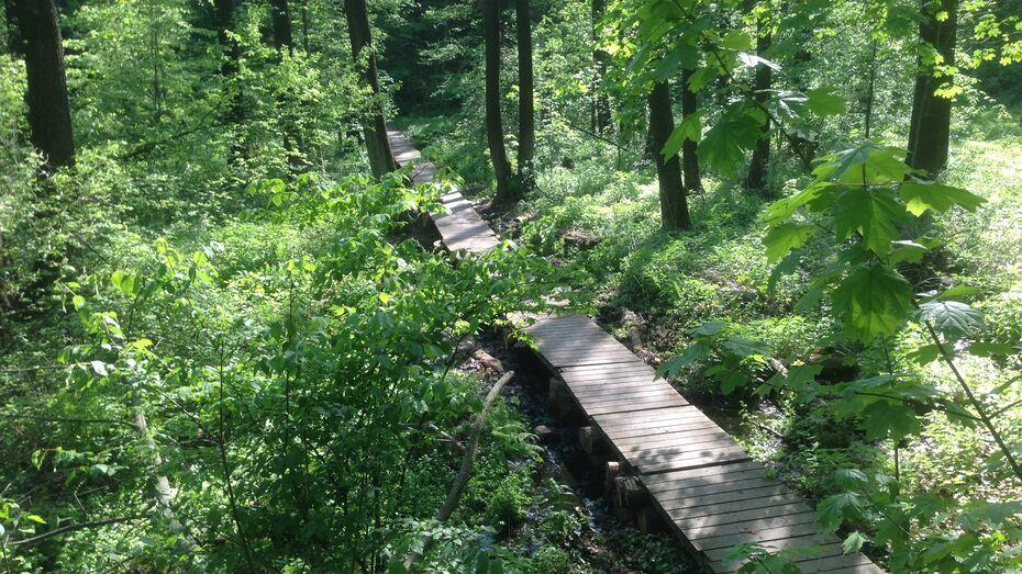 На Большой Воронежской экотропе восстановили разрушенные настилы