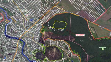 Под Воронежем вырубят 450 деревьев и кустарников ради велодорожки