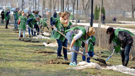 Месячник благоустройства начнется в Воронеже 1 апреля
