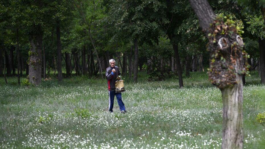Мэрия предложила воронежцам оценить проекты благоустройства зеленых зон