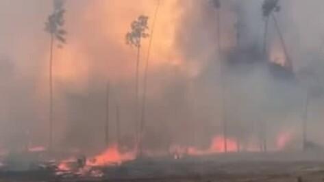 Под Воронежем разгорелся ландшафтный пожар