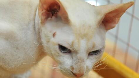 «Федерация кошек» назвала претензии воронежских зоозащитников необоснованными