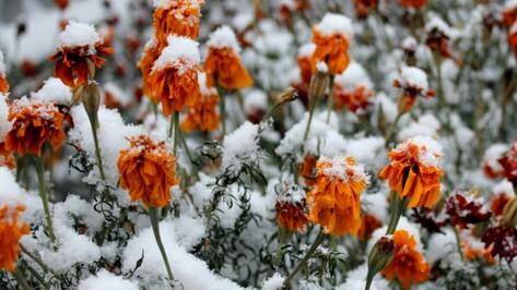 Рабочая неделя в Воронеже будет снежной
