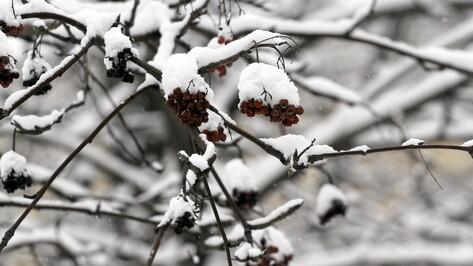 Метеорологи предупредили о снегопаде в Воронежской области в ночь на 25 февраля