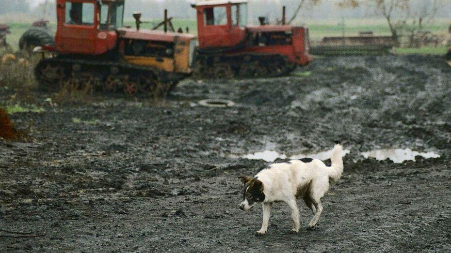 Под Воронежем бродячая собака покусала трех детей