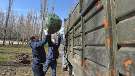 Воронежская мэрия наградит активных участников городского субботника