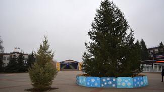 Жители воробьевского села Рудня подарили землякам 10-метровую елку