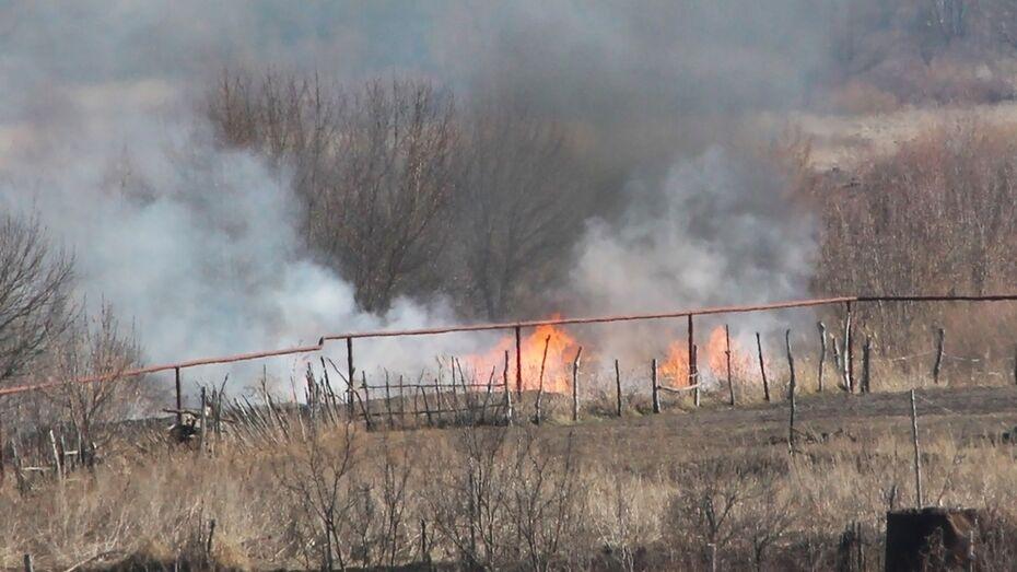 В Лискинском районе из-за сильного ветра выгорел гектар сухой травы