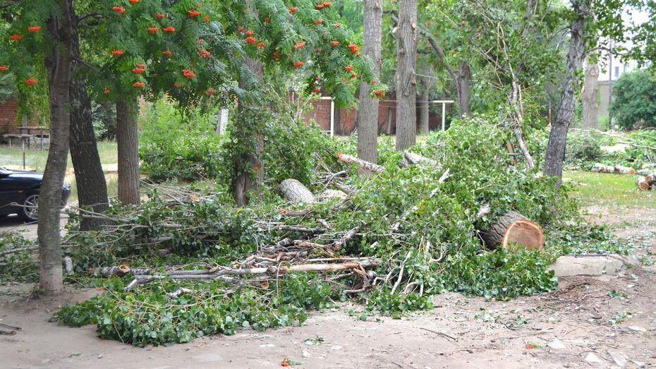 В Семилуках началась масштабная опиловка аварийных деревьев