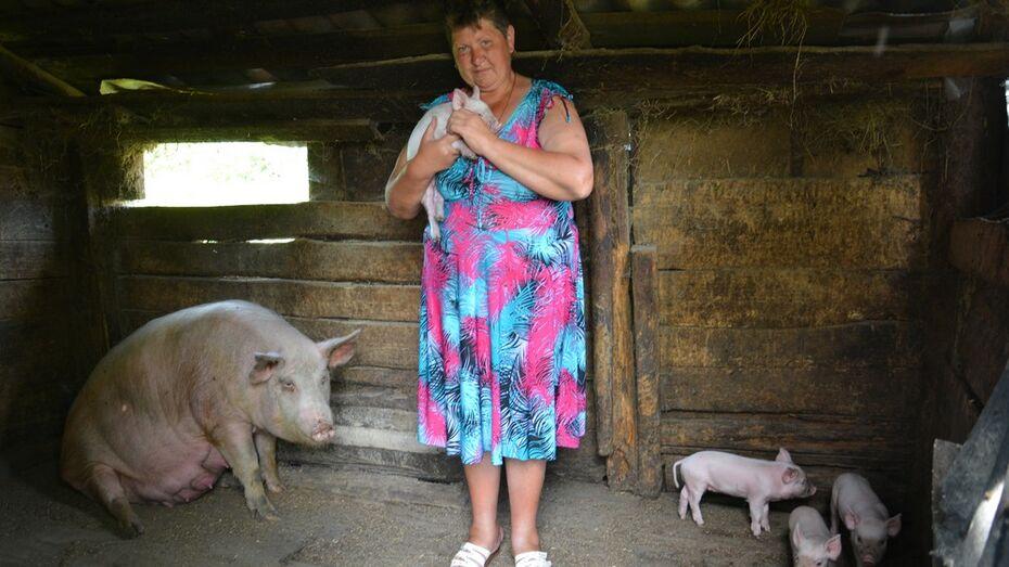В Воронежской области выявили очаг африканской чумы свиней