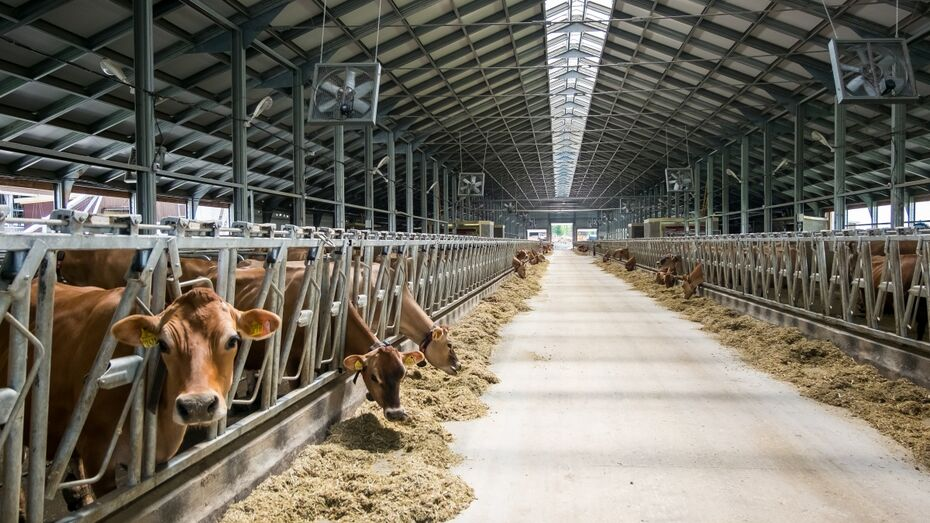 «Молвест» возобновит строительство молочной фермы в Верхнемамонском районе