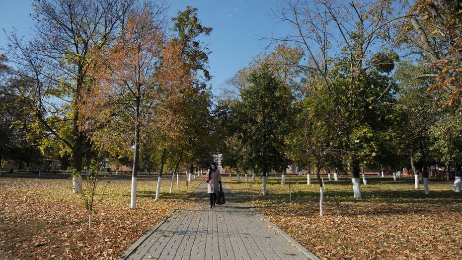 В Воронеже в конце рабочей недели потеплеет до +17 градусов