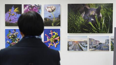 «Природа нуждается в нашей защите». В воронежском парке открылась «Экогалерея»