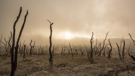 Концентрация углекислого газа в атмосфере достигла максимума за 30 лет
