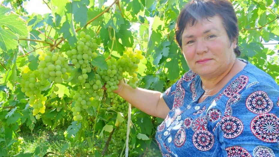 Жительница Воронежской области вырастила более 40 сортов винограда