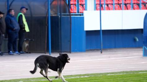 Власти вернутся к поиску зон для выгула собак в Воронеже