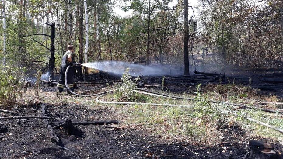 Под Воронежем из-за обрыва линии электропередачи произошел пожар
