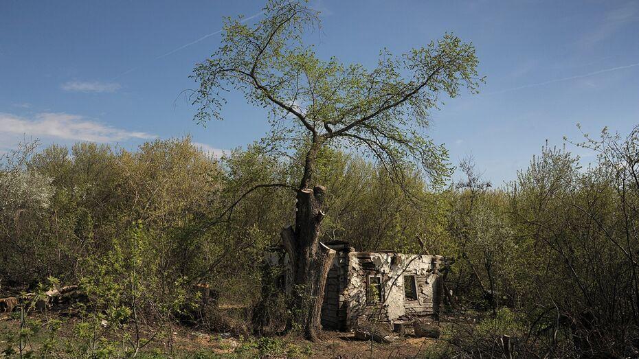 Заброшенные хутора: как пустеют воронежские деревни. Красный Пахарь