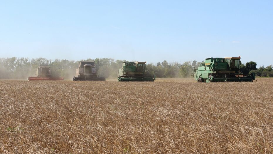 Рекордный урожай зерна собрали таловские аграрии