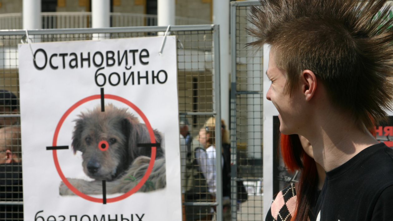 Обзор РИА «Воронеж». Чего добились авторы петиций