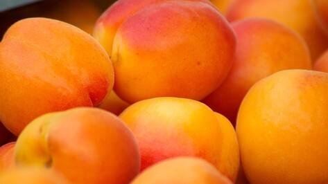 Под Воронежем уничтожили 200 кг санкционных абрикосов