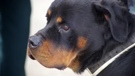 В Воронеже зоозащитники предложили хозяевам нервных собак вешать на поводки желтые ленты