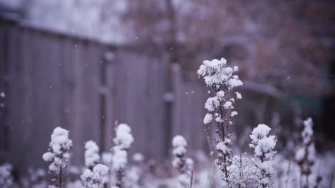 В Воронеже в выходные потеплеет до +4 градусов