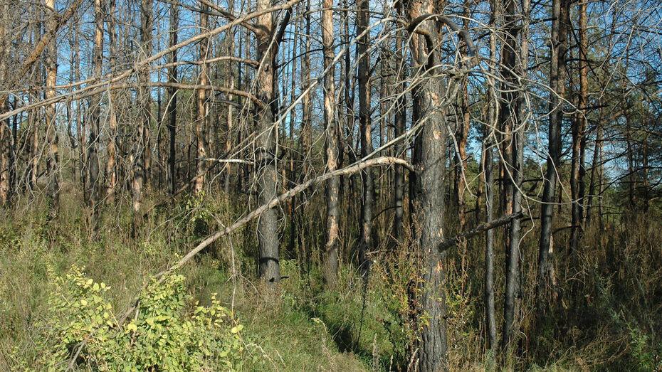 Разработка 10-летнего плана для воронежских лесов обойдется в 3,6 млн рублей