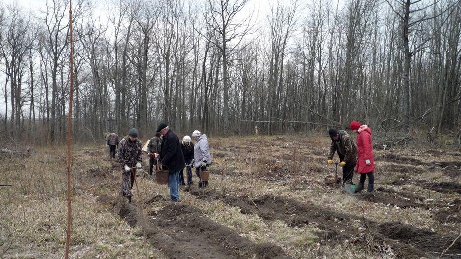 В Подгоренском районе деревья посадят на 19 га