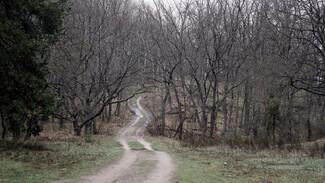 Инструкция РИА «Воронеж». Как не заблудиться в лесу