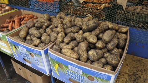 В Госдуме создали рабочую группу по борьбе с ростом цен на сезонные продукты