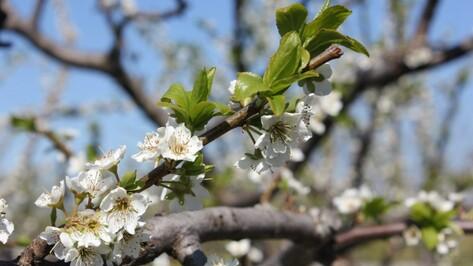 Теплая и сухая погода в Воронеже установится к 9 мая