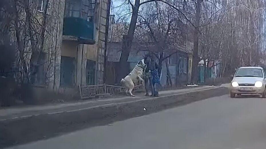 В Воронеже на девушку с ребенком напала собака