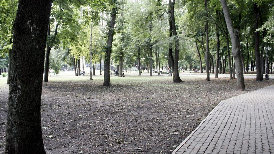 В Воронеже высадили 3 тыс деревьев весной 2017 года