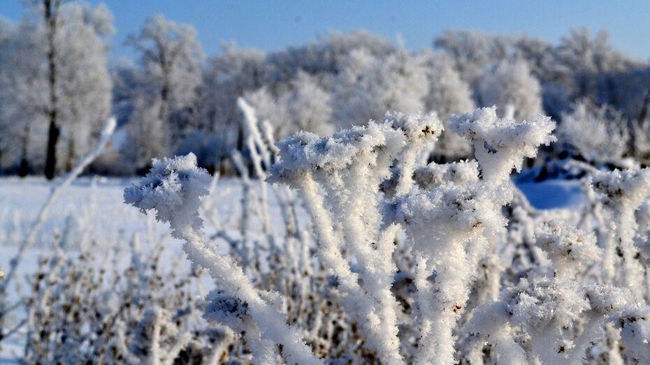В Грибановском районе в ночь на 26 января температура опустилась до -32 градусов
