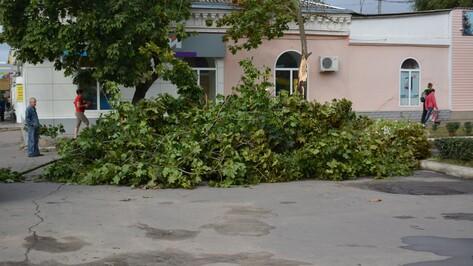 В Острогожском районе ураган повалил 14 деревьев и оборвал электролинии