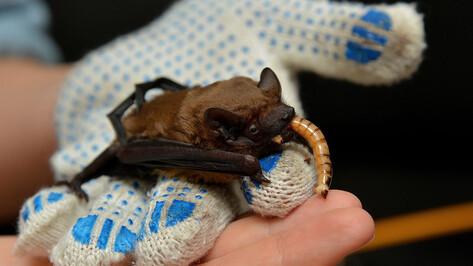 Выпускной для летучих мышей пройдет в воронежском парке