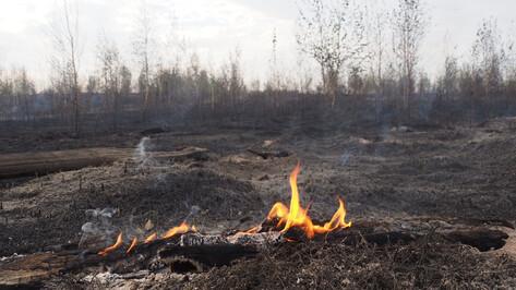 В Воронежской области объявили чрезвычайную пожарную опасность