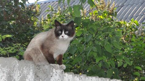 В Репьевском районе ветеринары начали вакцинацию животных от бешенства