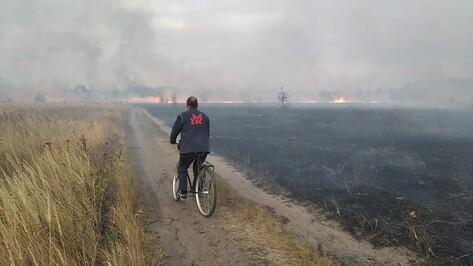 За три дня в Воронежской области установился III класс пожарной опасности
