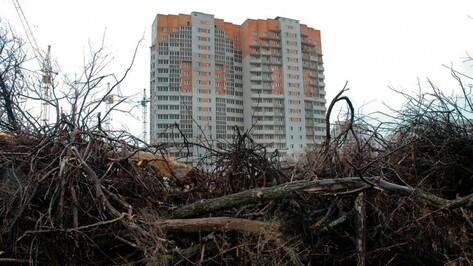 Активисты ОНФ поддержали мораторий на вырубку деревьев в Воронежской области
