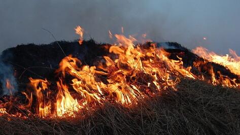 Ландшафтные пожары за день накрыли в Воронежской области более 67 га
