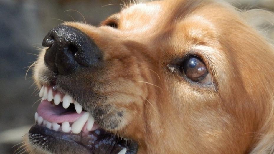В Семилуках хозяйка покусавшей пенсионерку собаки заплатит 15 тыс рублей компенсации