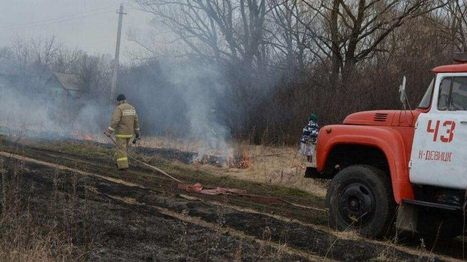В Грибановском районе выгорело 500 квадратных метров сухой травы и камыша