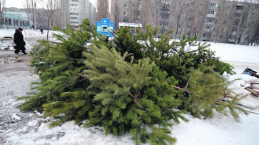 Житель Воронежской области потерял деньги, пытаясь продать ель