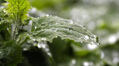 Рабочая неделя пообещала быть дождливой в Воронежской области