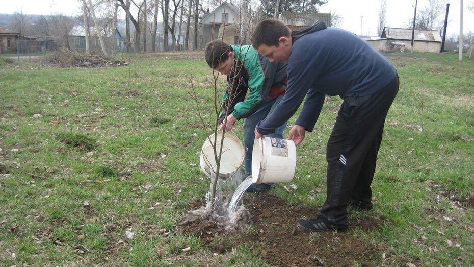 В Семилукском районе в «Лесах Победы» высадили 4 тыс деревьев