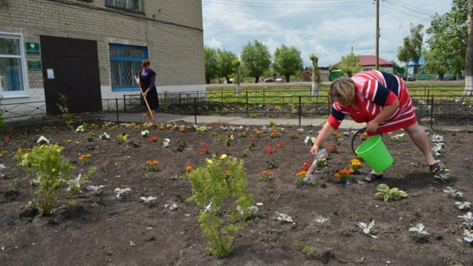 В нижнедевицком селе разбили два цветника за 100 тысяч рублей