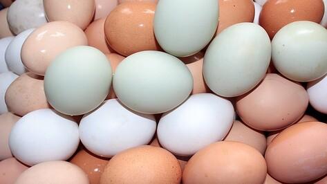 Воронежская область предложила экспорт мяса и яиц в Израиль