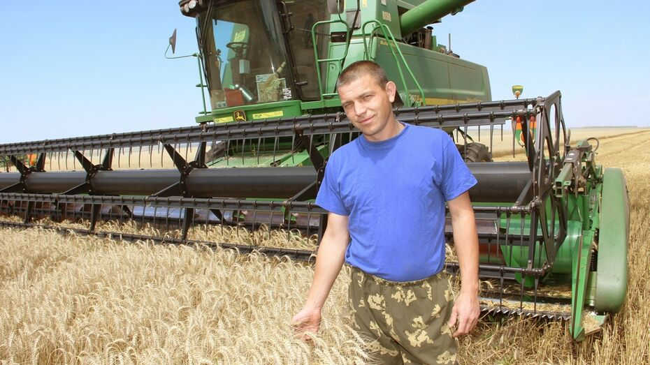 Урожайность ранних зерновых в Лискинском районе достигла 34,9 центнера с га